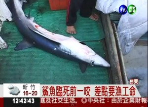 The shark responsible for the bite on a fisherman in Taiwan