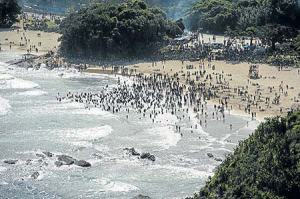 Swimmers at Second Beach, Port St Johns, South Africa - the day after the fatal shark attack.